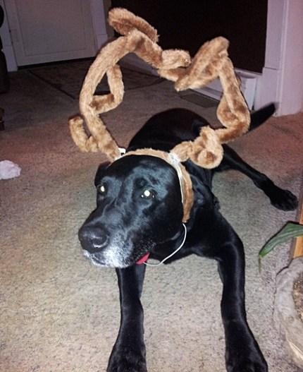 Reindeer Gunner